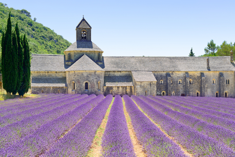 The benefits of lavender for medicinal use are incredibly varied and versatile. Lavender oil is something you always want to have on hand, find out why here... #lavender #herbalremedies #naturalremedies #realremedies #sciencebased ~ For more healthy living tips, visit SarahMichalMcLain.com